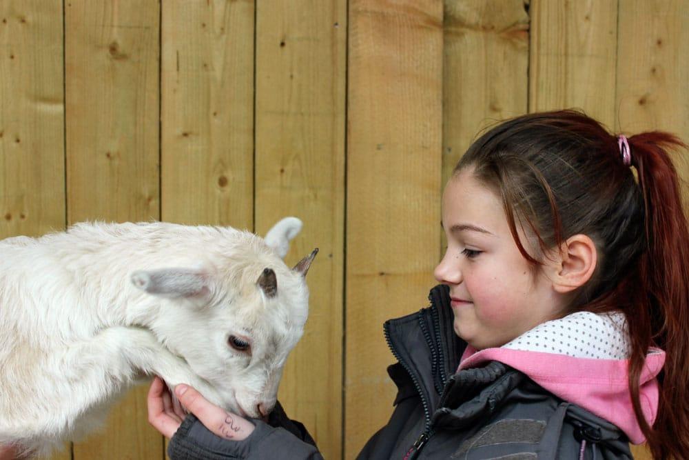 Meet-the-goats