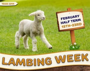 February-Half-Term-web-image