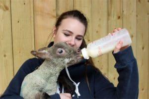 Lambing-experience