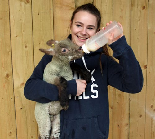 bottle-feeding-lambs-2